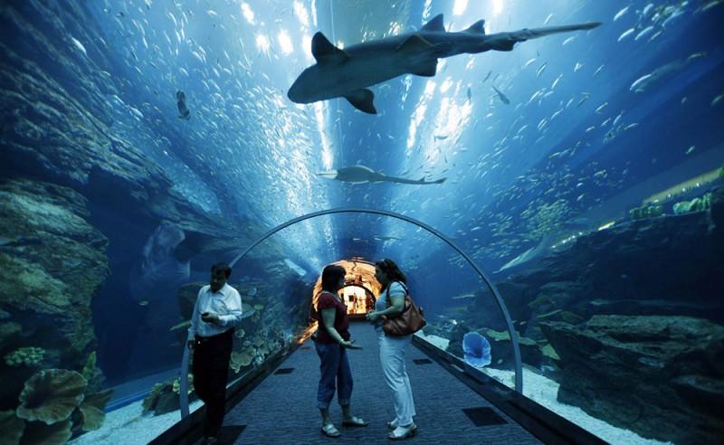 lux et veritas design   Dubai Mall Aquarium - lux et ...
